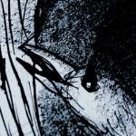 EDITION-DVD-L'OISEAU - SAMUEL-YAL-01